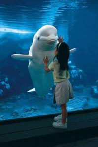 31 - bambina e delfino