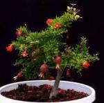 6 pianta giovane